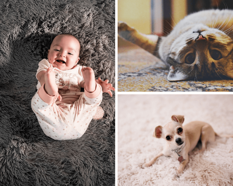 Baby, cat and small dog all lying down on a carpet - photo collage